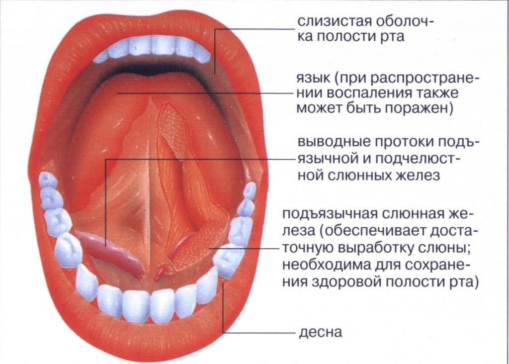 Мифы о полости рта