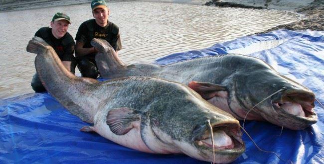 Рыбалка как отдельный вид искусства